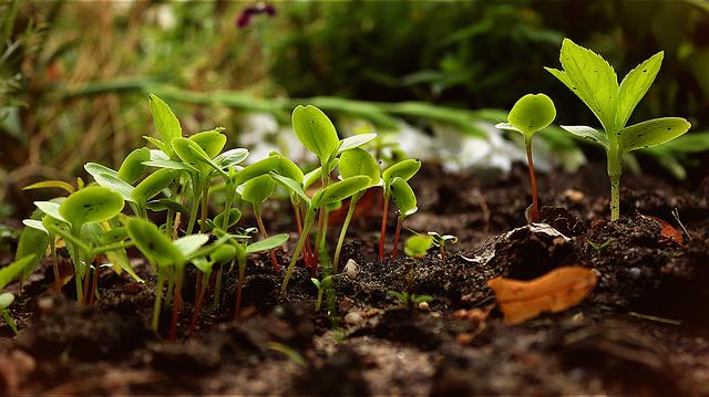 ธาตุอาหารที่จำเป็นสำหรับพืช